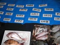 タイの名のつく魚